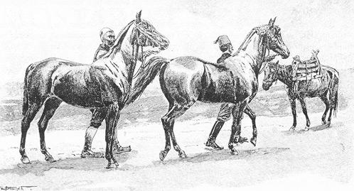 Bosanski konj, crtež Rudolfa von Ottenfelda iz 1900. godine
